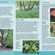 Shorne Woods Country Park leaflet