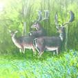 Fallow deer, hand-painted