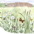 Meadow illustration