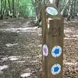 Waymarker posts